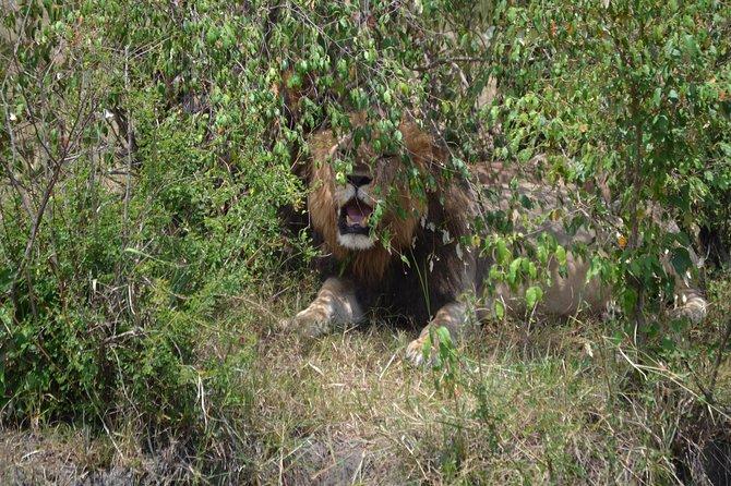 8 Days Uganda Gorillas & Masai Mara Safari