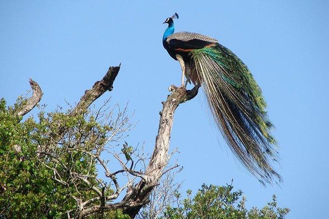 Wilpattu National Park Tour