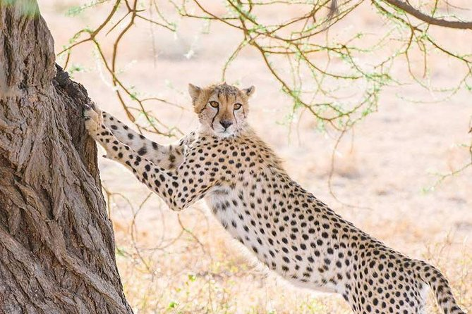Tanzania Wildlife Safari 5day