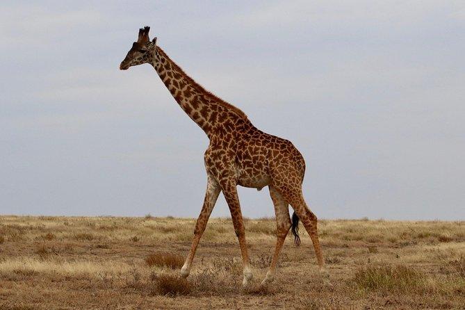 Tanzania 3Day Mid Range Safari