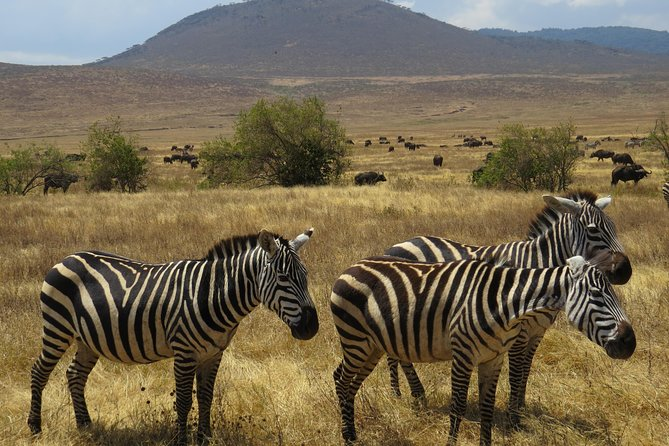Tanzania 4 Days Tarangire, Manyara, Serengeti & Ngorongoro Crater