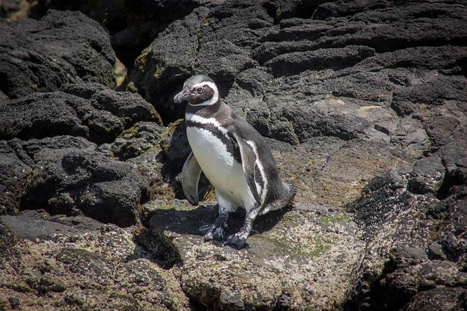Excursion to Chiloe Island: Ancud and Penguin Colony