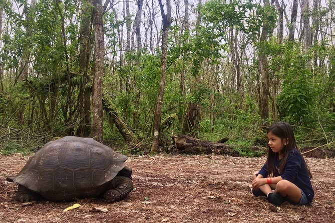 The Giant Tortoise Experience | Lava Tubes + Los Gemelos (Shared Tour)