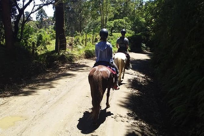 horseback riding coffee farms Salento Quindio