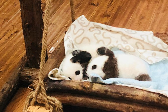 Half Day Private Chengdu Panda Center Layover Tour