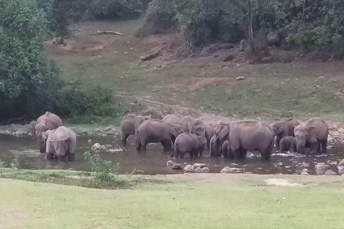 Anakulam Wild elephant Visiting
