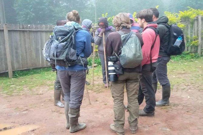 1 Day Gorilla trekking in Rwanda Tour