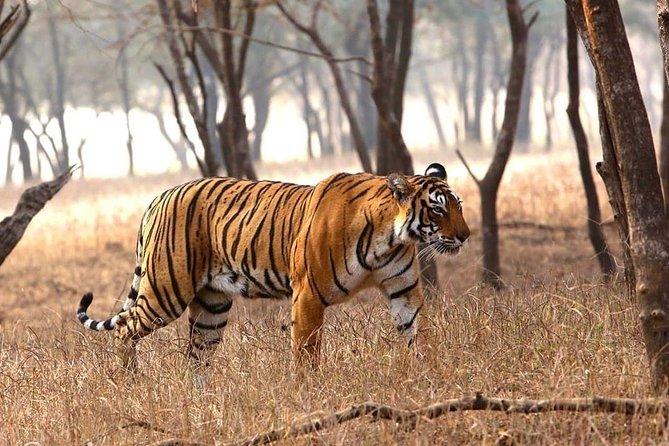 Ranthambore National Park Tiger Reserve