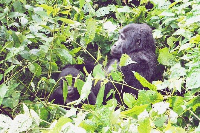 3 Days Gorilla Trekking Safari