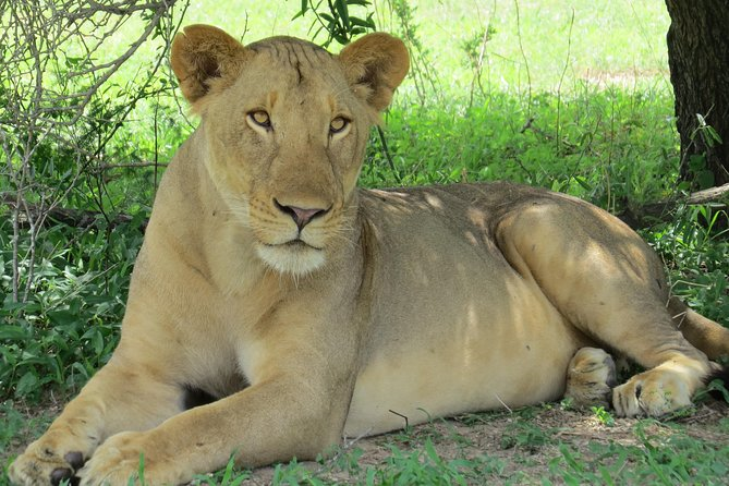 3 Days, 2 Nights Stay in 5 Star Lodges Safari