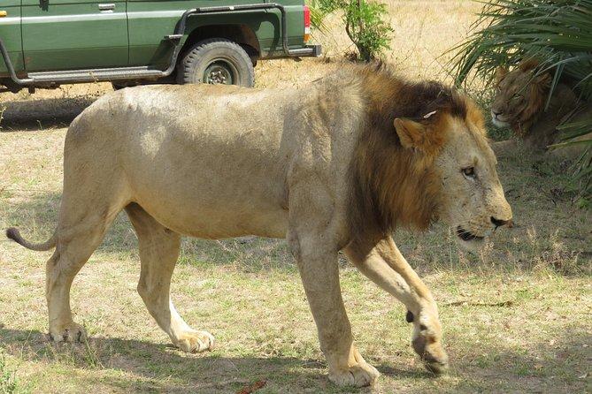 4 Days 3 Nights in 5 Star Lodges Safari