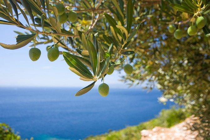 Secret of organic oil production - the olive garden tour on Luštica peninsula photo 4
