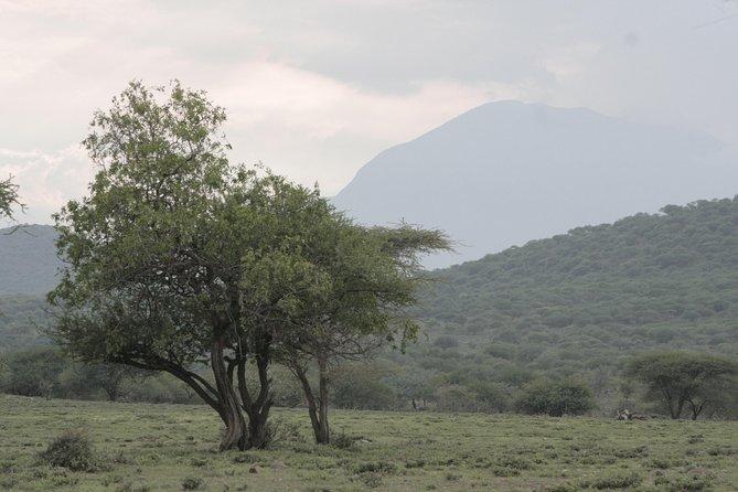 Kilimanjaro Climbing 6 Days 5 Nights Marangu Route