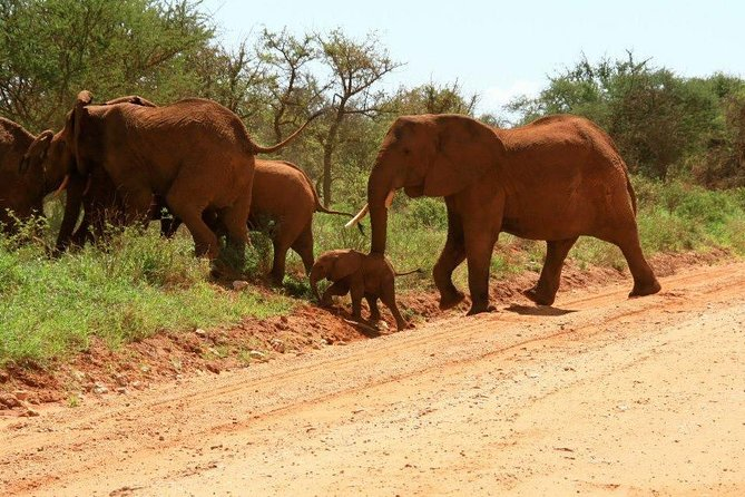 7 Days Kenya wildlife combined with south coast beach holiday.