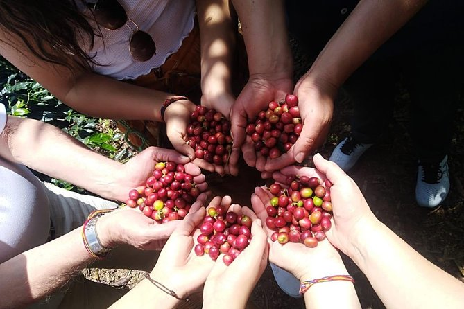 Coffee Tour Medellin photo 1