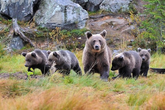 Bear and Cubs Photography