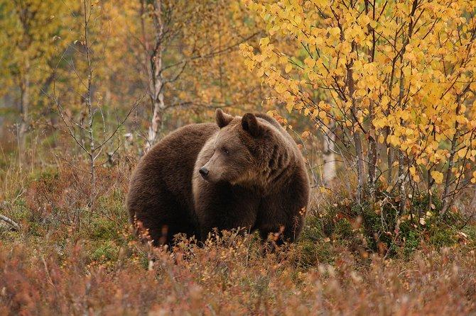 Bear Photography on Autumn