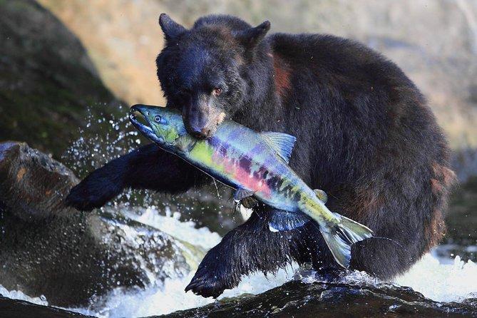 Neets Bay Bear Adventure & Flightseeing