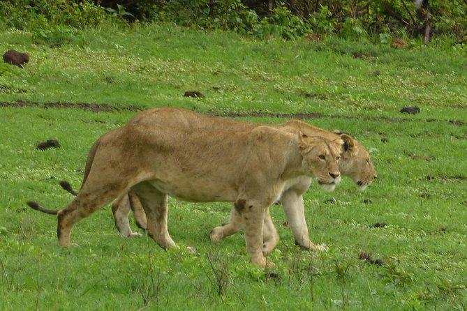 4Nights 5Days Safari (Amboseli→Lake Naivasha→Masai Mara→Departure Land cruiser