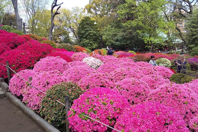 Half Day - Private Tour based on your requests in Tokyo photo 4