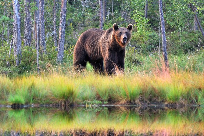 Bear Watching, evening trip photo 4
