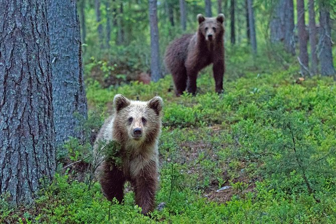 Bear and Cubs Photography photo 4
