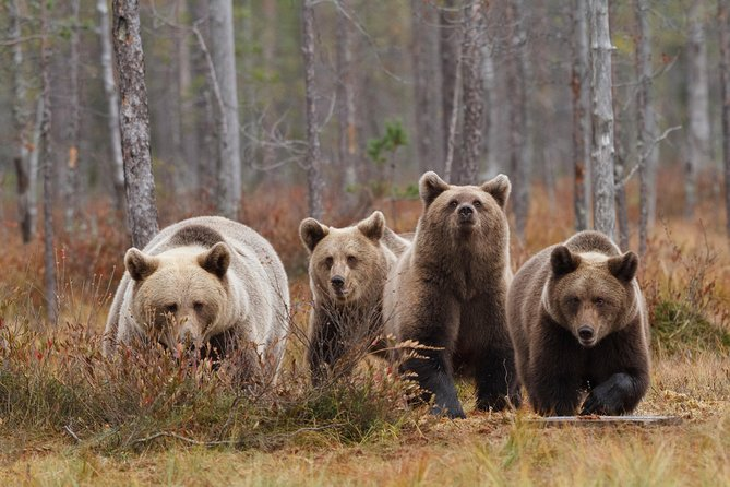 Bear and Cubs Photography photo 3
