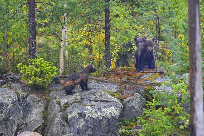 Bear and Cubs Photography photo 8