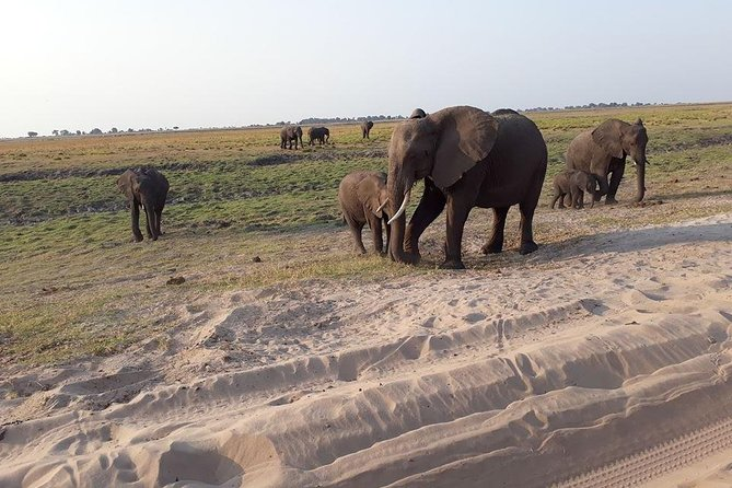 Chobe Day Trips from Victoria Falls Town, Zimbabwe