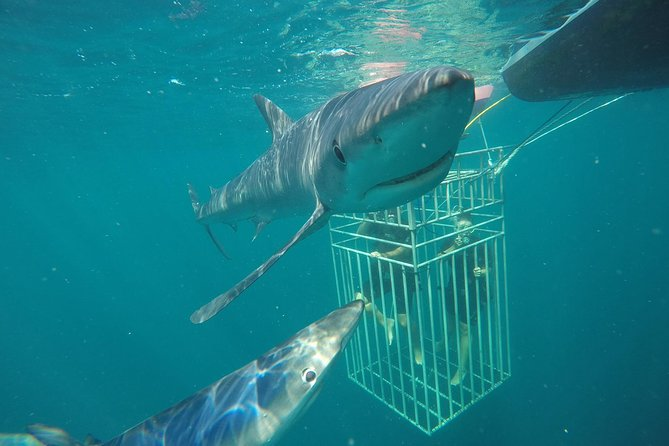 Shark Cage Charter