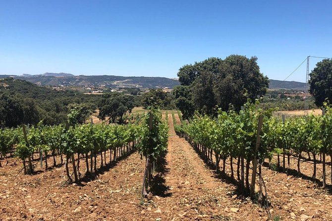 Ronda Full Day Wine Tour from Marbella