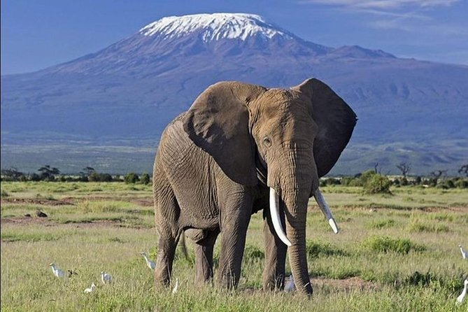 3 Days Tsavo East and West Private Safari from Mombasa