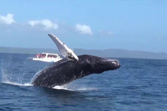 Samana and Whales from puerto plata