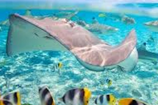 Snorkeling with sharks and sting rays half day group tours bora bora photo 4
