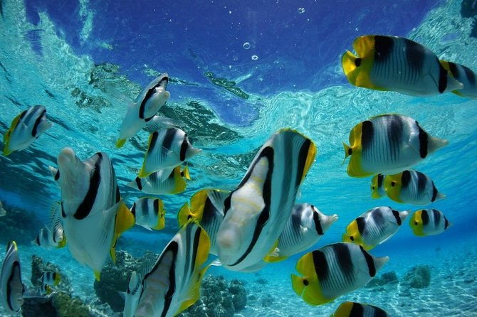Snorkeling with sharks and sting rays half day group tours bora bora photo 9
