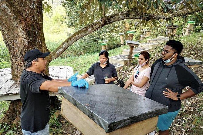 Bee Farm Experience