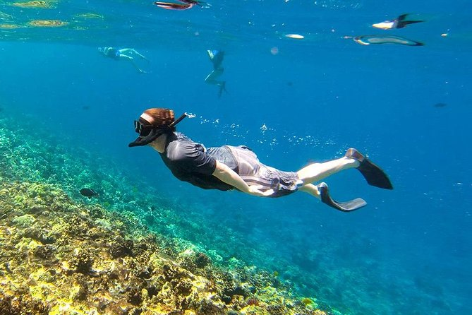 Reef, Wildlife & Rainforest - Reef & Beyond Guided Holidays
