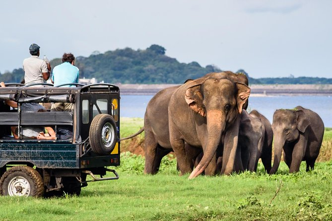 Experience in Wildlife Safari - One Day Excursion in Yala National Park
