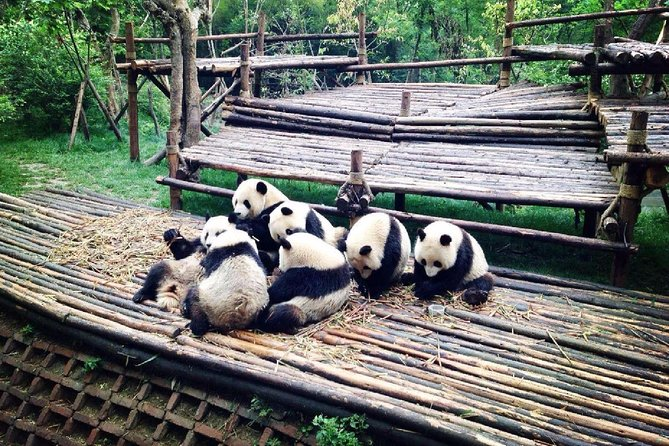 Private 2-Day Chengdu Sightseeing Tour: City Highlights, Panda, Leshan Buddha