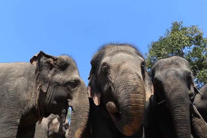 A Morning with Elephants