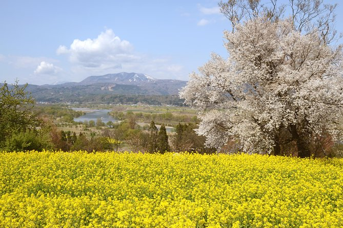 "BTF Rural Japan ""FURUSATO"" Cherry Blossom Cycling Tour photo 8"