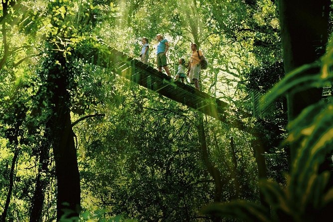 Tamborine, Lamington, O'Reilly's - Rainforest & Wildlife Tour