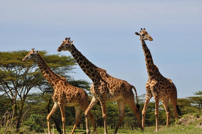 3 Days visiting Tarangire, Lake Manyara and Ngorongoro crater