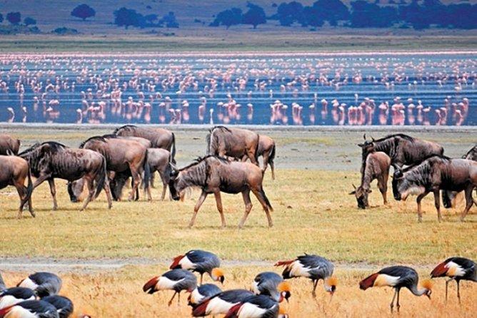 Ngorongoro crater day tour from Arusha