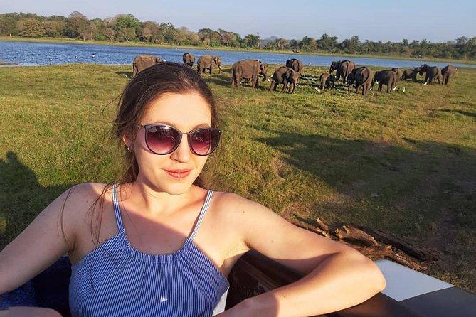 Evening Safari in Minneriya National Park from Colombo