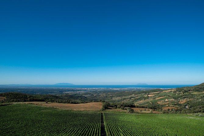 Bolgheri Wine Tour: spectacular tasting among the coastal hills of Tuscany