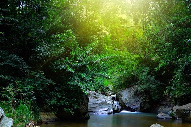 Special for Nature Lovers - One Day Excursion in Sinharaja Forest Reserve