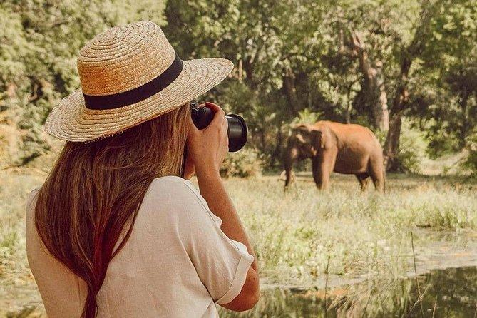 Evening Safari in Minneriya National Park from Negombo