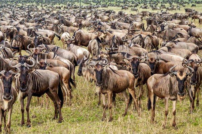 7 Days 6 Nights 4 Star Lodges Safari