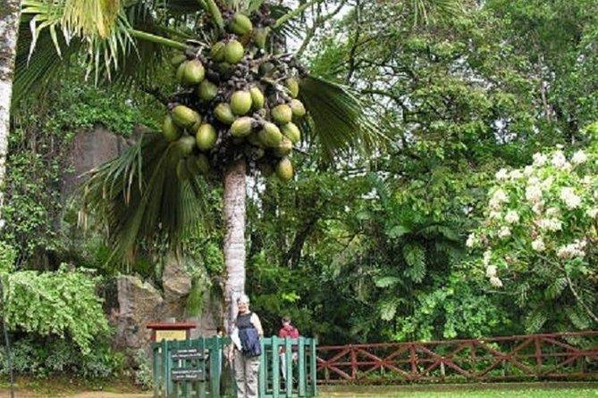 Coco de mer (world's biggest Nut)